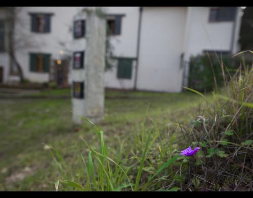fiore viola 2